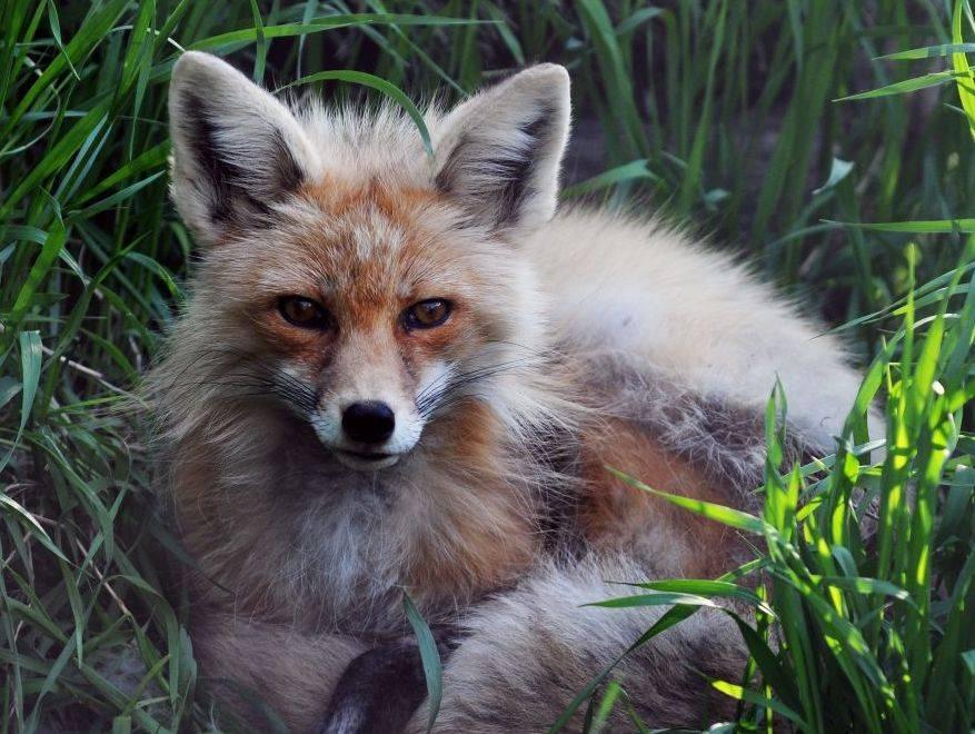 Saskatoon Forestry Farm and Zoo
