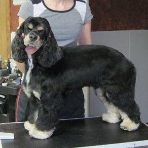 Kimberly Wi Details pet groomer appleton