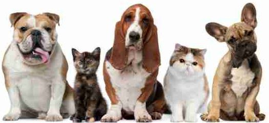 Image of Cats and Dogs for pet friendly apartment search with AptExpert.com