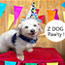 Parties / Paw'ty : Birthdays & more !  : Celebrate your fur - friend's bday / gotcha day, holidays, & more with a private paw'ty !  Option of space rental or a complete catered dog party (inc. decor, pup'cakes, photos , & more. ) *Available Weekends. Must be scheduled 2-3 weeks in advance.   * Contact Z Dog for available dates, additional details, and to schedule your Paw'some Pet Care !