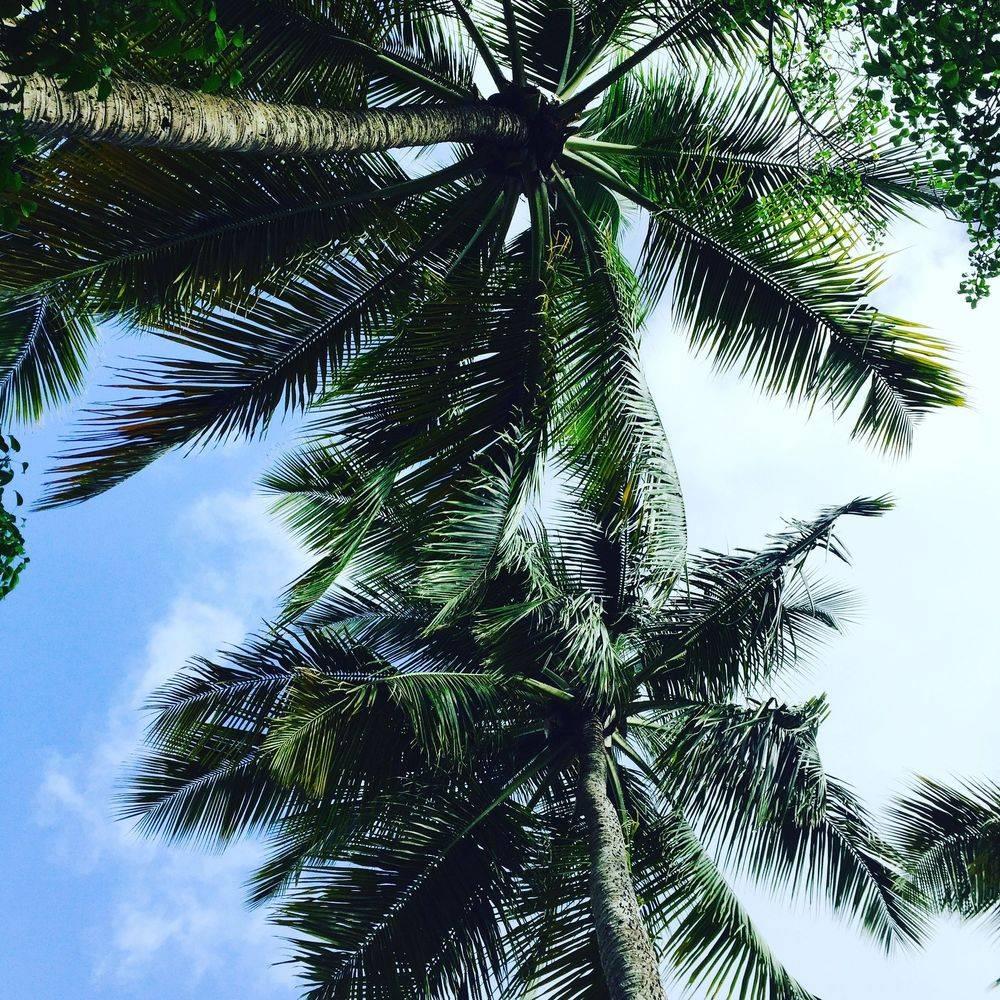 Tartane, Martinique, Vacances, Surf