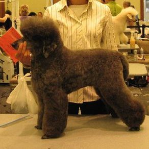 details dog grooming appletonKimberly Wi Details pet groomer appleton