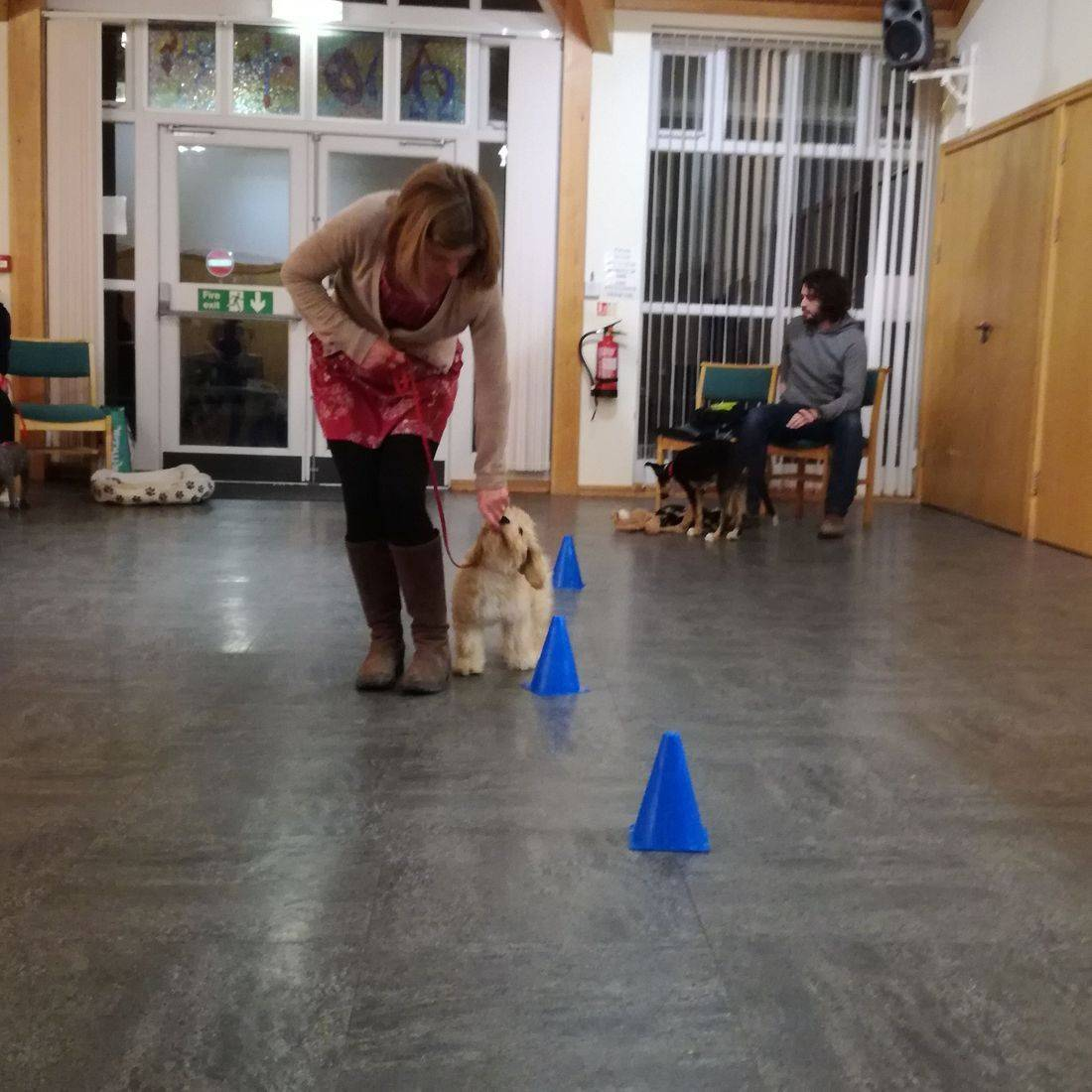 Horsham Dog and Puppy Training