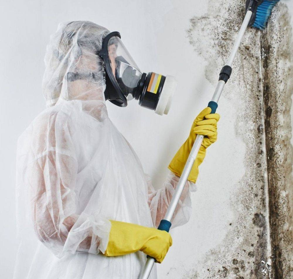 mold inspection and testing San Francisco CA