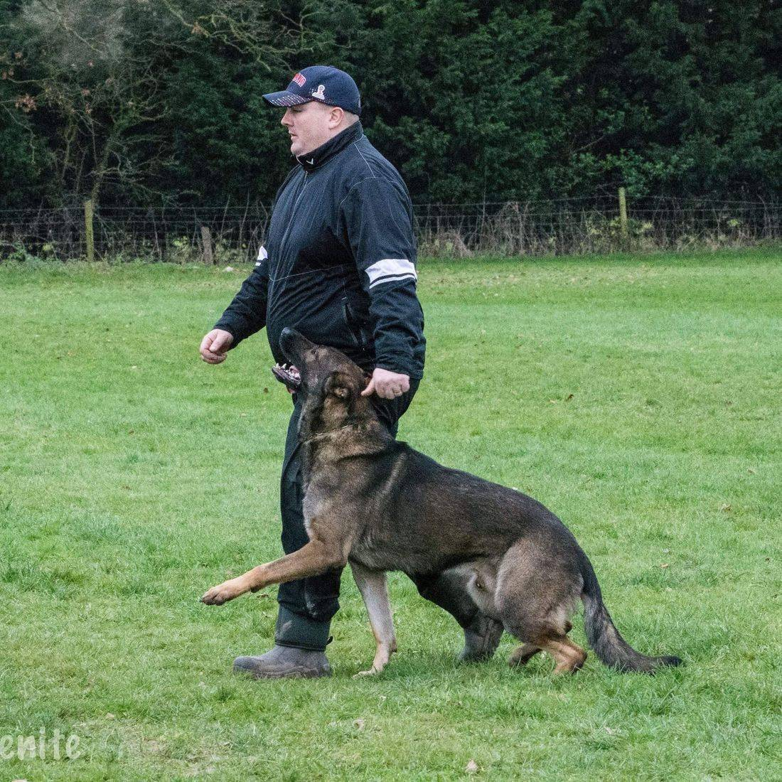 IPO@NATIONALDOGTRAININGCENTRE . NICO IPO3 OBEDIENCE, TRACKING, PROTECTION  . ALL BREEDS NATIONAL QUALIFIER