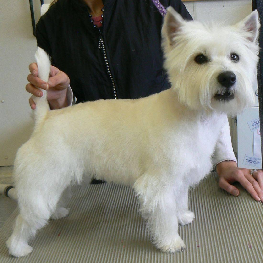dog groooming details Kimberly Wi Details pet groomer appleton