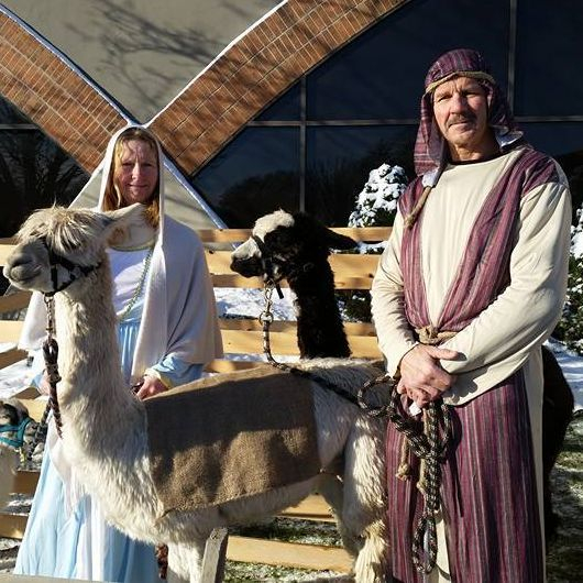 People dressed in nativity costumes holding an alpaca