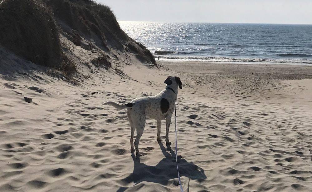 Hundetrainerin Marion Höft und ihre Hündin
