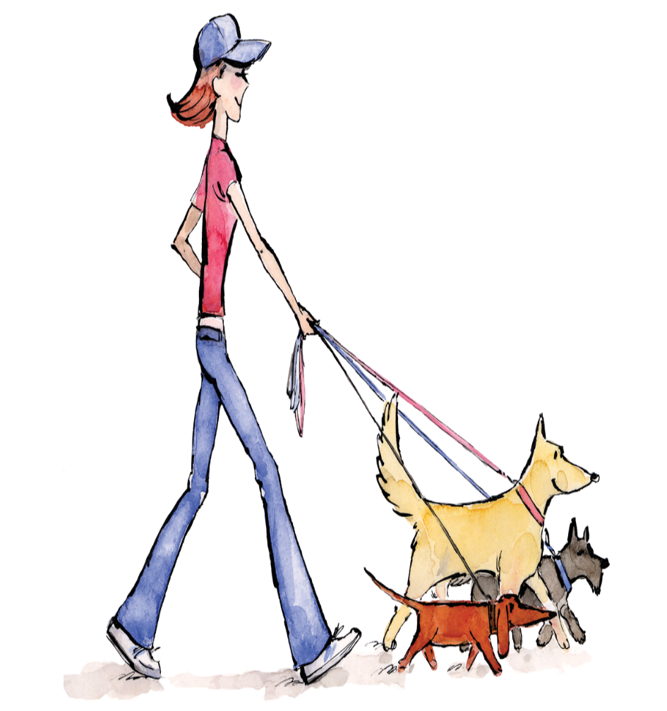 Illustration of a woman walking three dogs on leashes