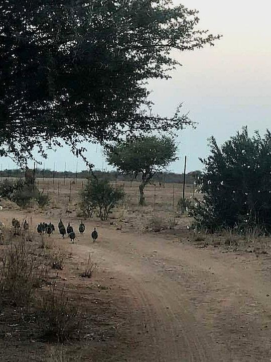 Agri-tourism, agriculture namibia, alfie louw, outjo safaris, daytours namibia, etosha, local farming, semi arid namibia, family activities, family travel, children namibia, outjo
