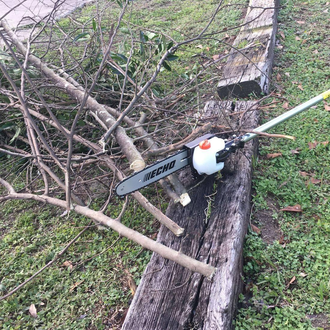 <pruning><trimming><limbs><bushes><trees><shrubs>