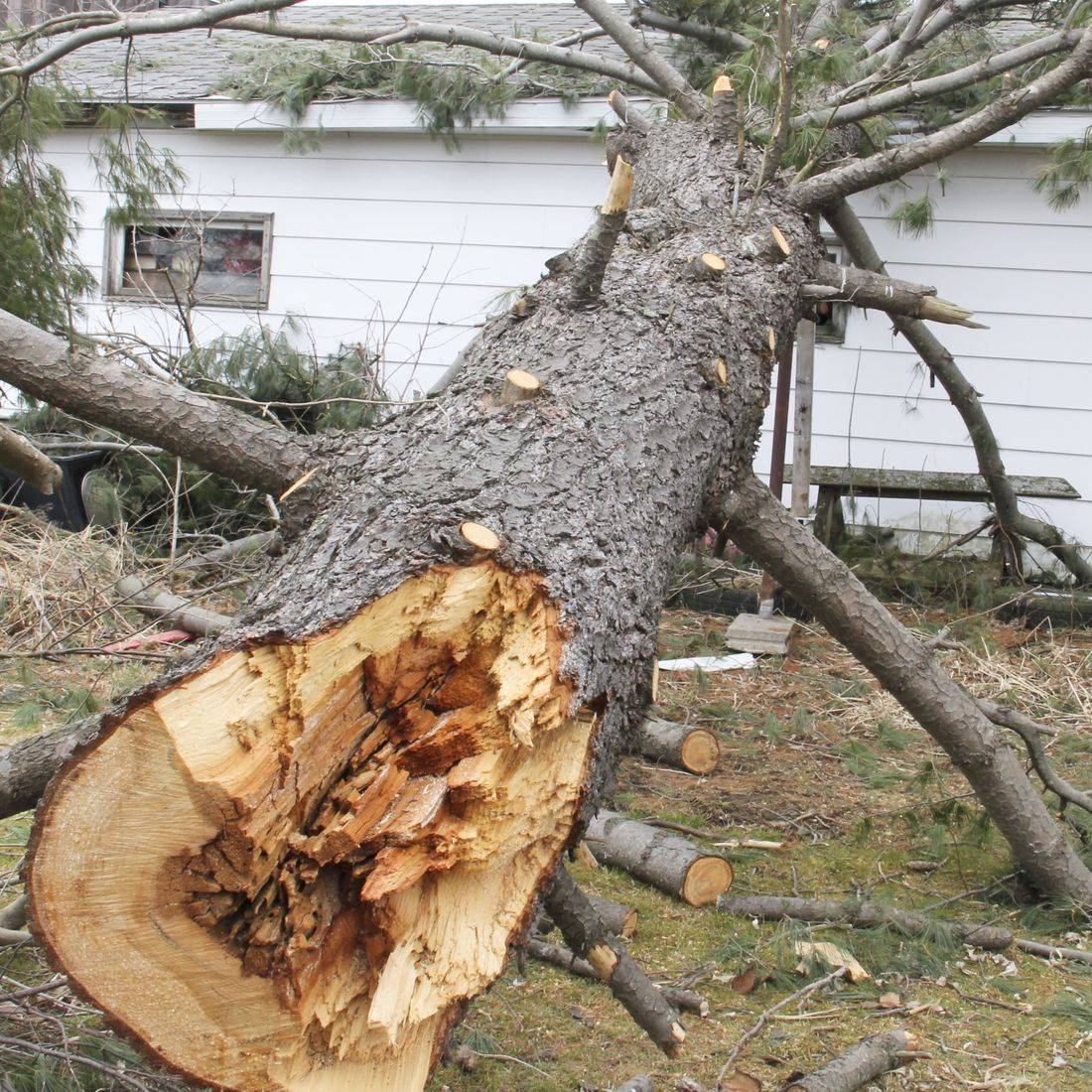 Cord Firewood of Tucson