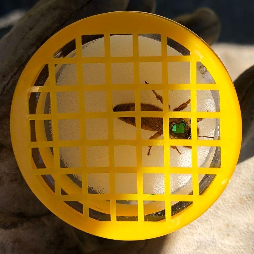 Steinbock Farm Bee Hive Queen Marking