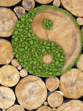 Planet Cents, Planet Sense, Leslie Sheridan, Climate Change, Global Warming, CSR, ESG, Sustainability, Sustainable, Get Planet Cents, Corporate Social Responsibility, Environmental Social and Governance, Environmental Services, Environmental Products, Planet Earth
