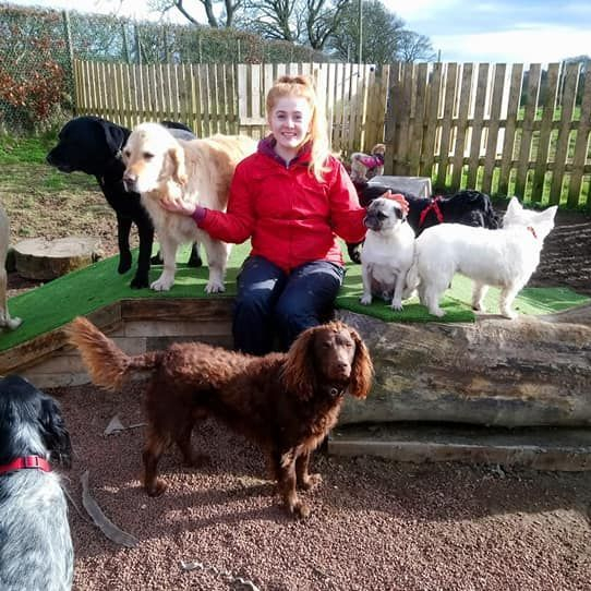 Puppy creche at Tails of Tranquility, Newton Mearns, Glasgow