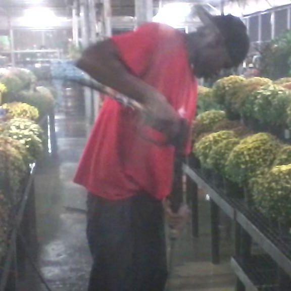 Pressure clean Walmart Garden Center