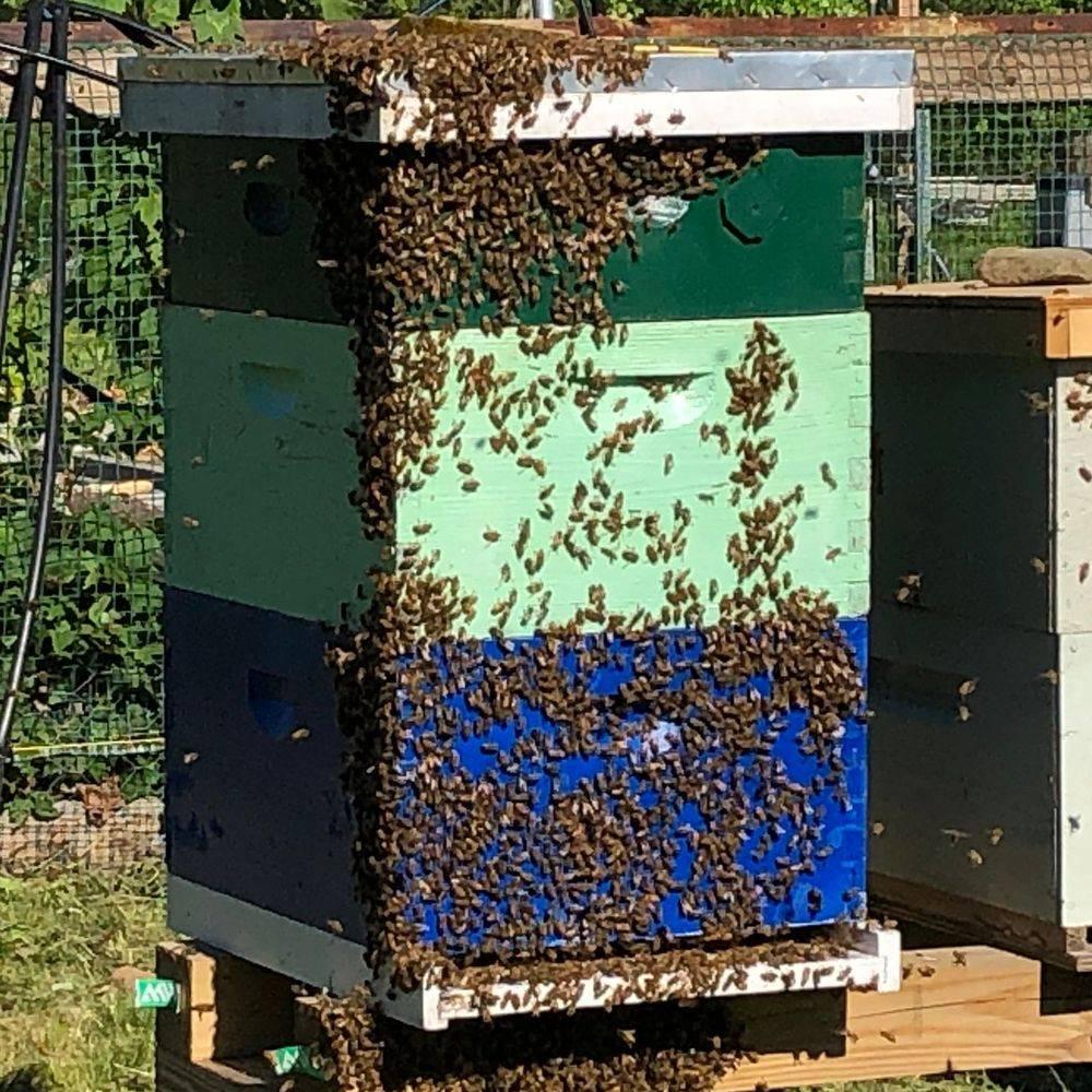 Steinbock Farm Swarming Hive
