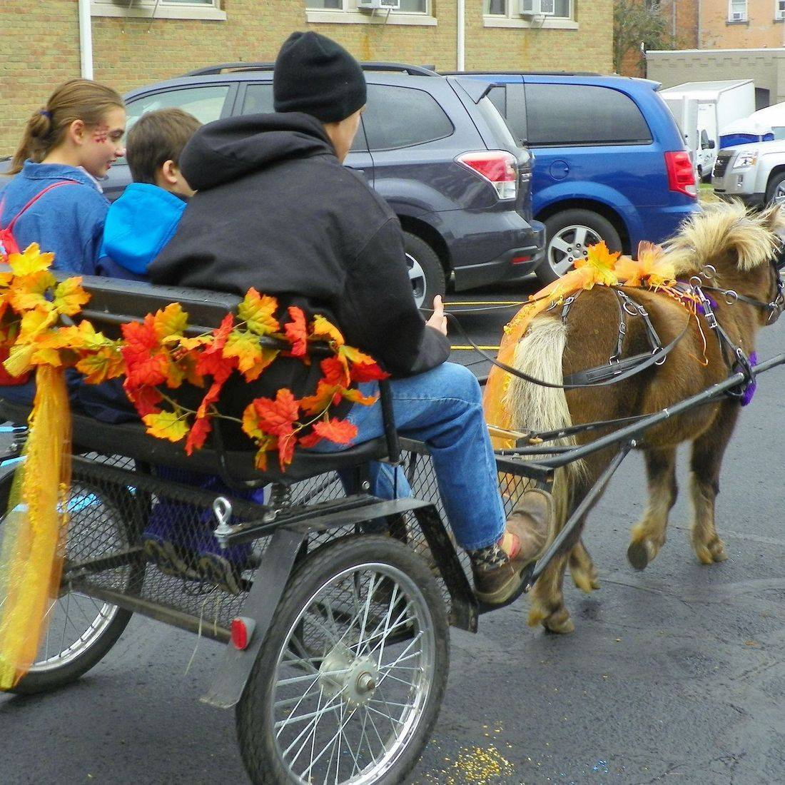 Pony giving children pony cart rides