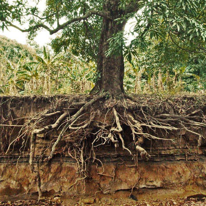 Sacramento Root Removal