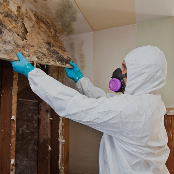 mold removal, healthy home, toxins, myrtle beach, affordable services, cleaning crew, cleaning service, highly rated, 5 stars, top, best, excellent, tyvex suit, air mask
