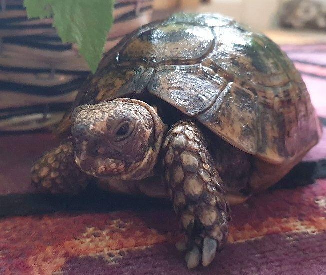 Angel Reiki Healing For Tortoise Reiki Master Helius Andreas