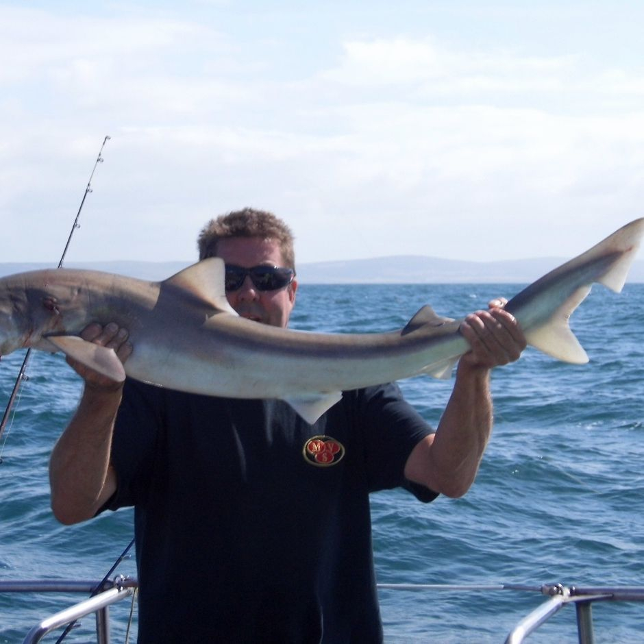 Greg Pitt Sea Fishing