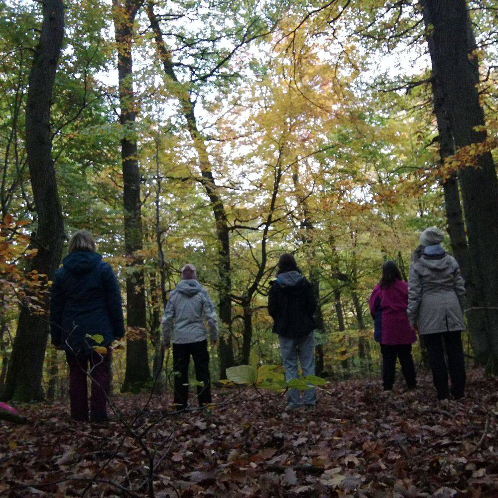 Heike Otto Gruppe Bäume Stamm Stämme Blätter Herbst