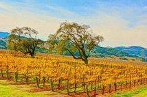 Vineyard Venues In Sonoma, Napa