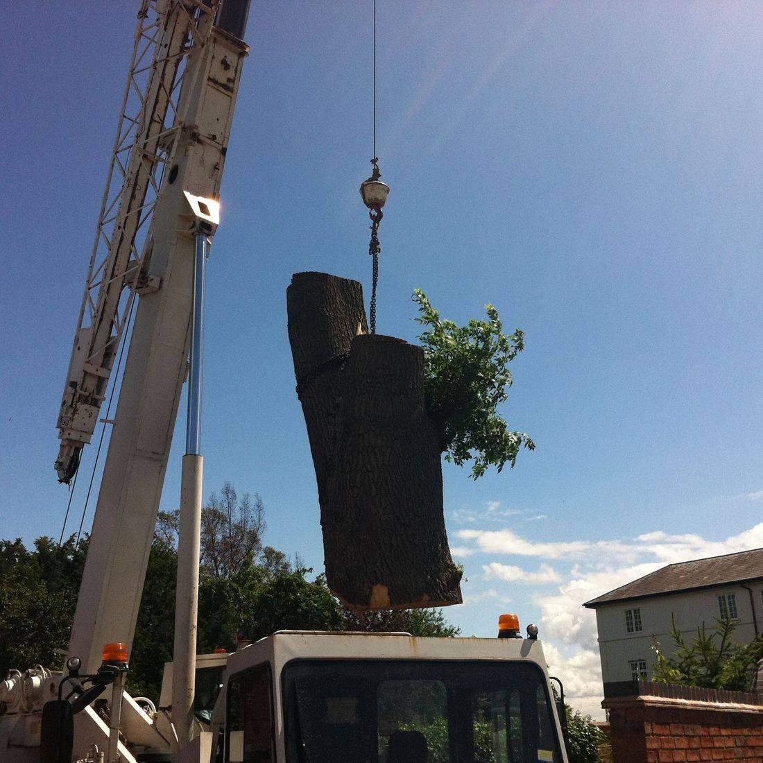 The Big Tree Specialists