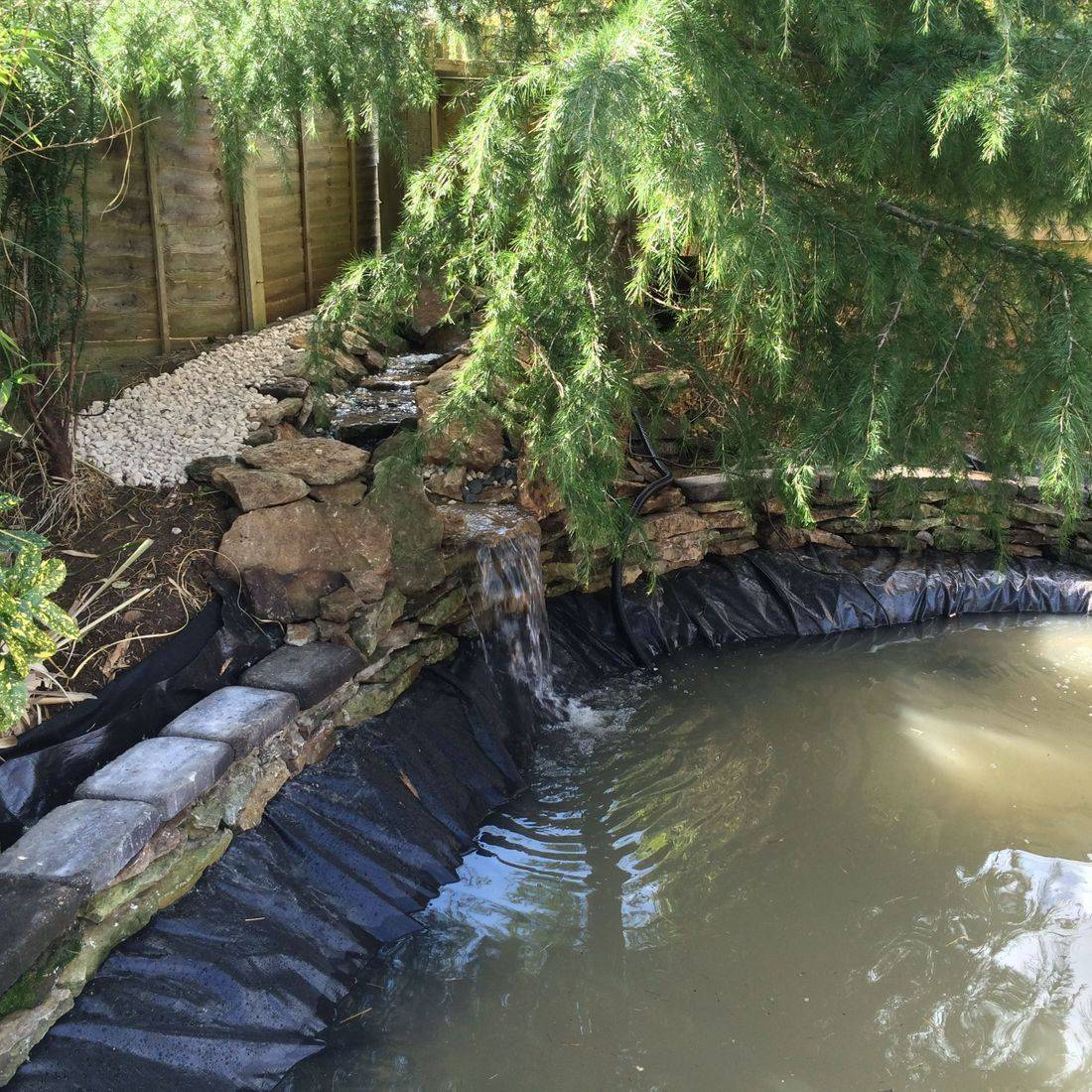 pond build koi gold fish start filter tree