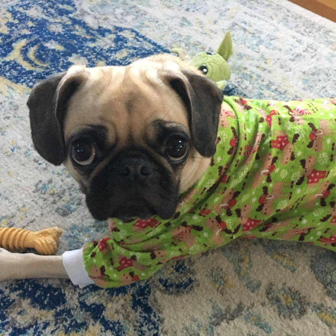 Pug dog in pajamas laying on a rug