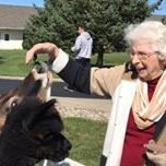 Senior woman petting cow