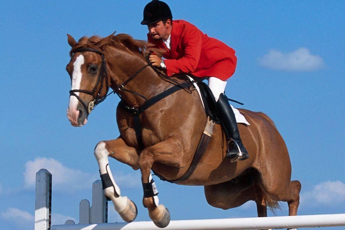 Horse Performance