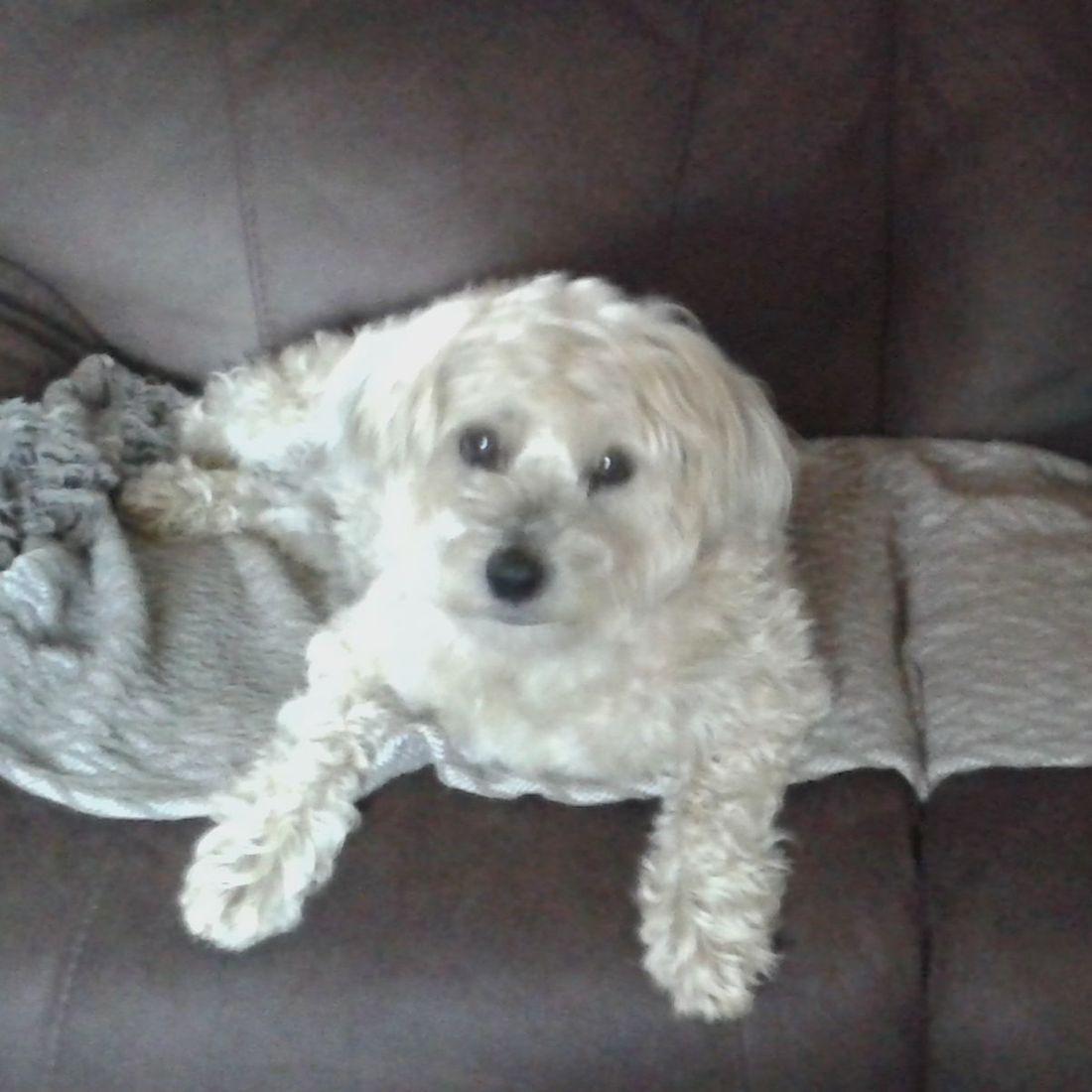 Cute dog on sofa