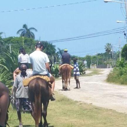 Black River Safari, St. Elizabeth, Jamaica