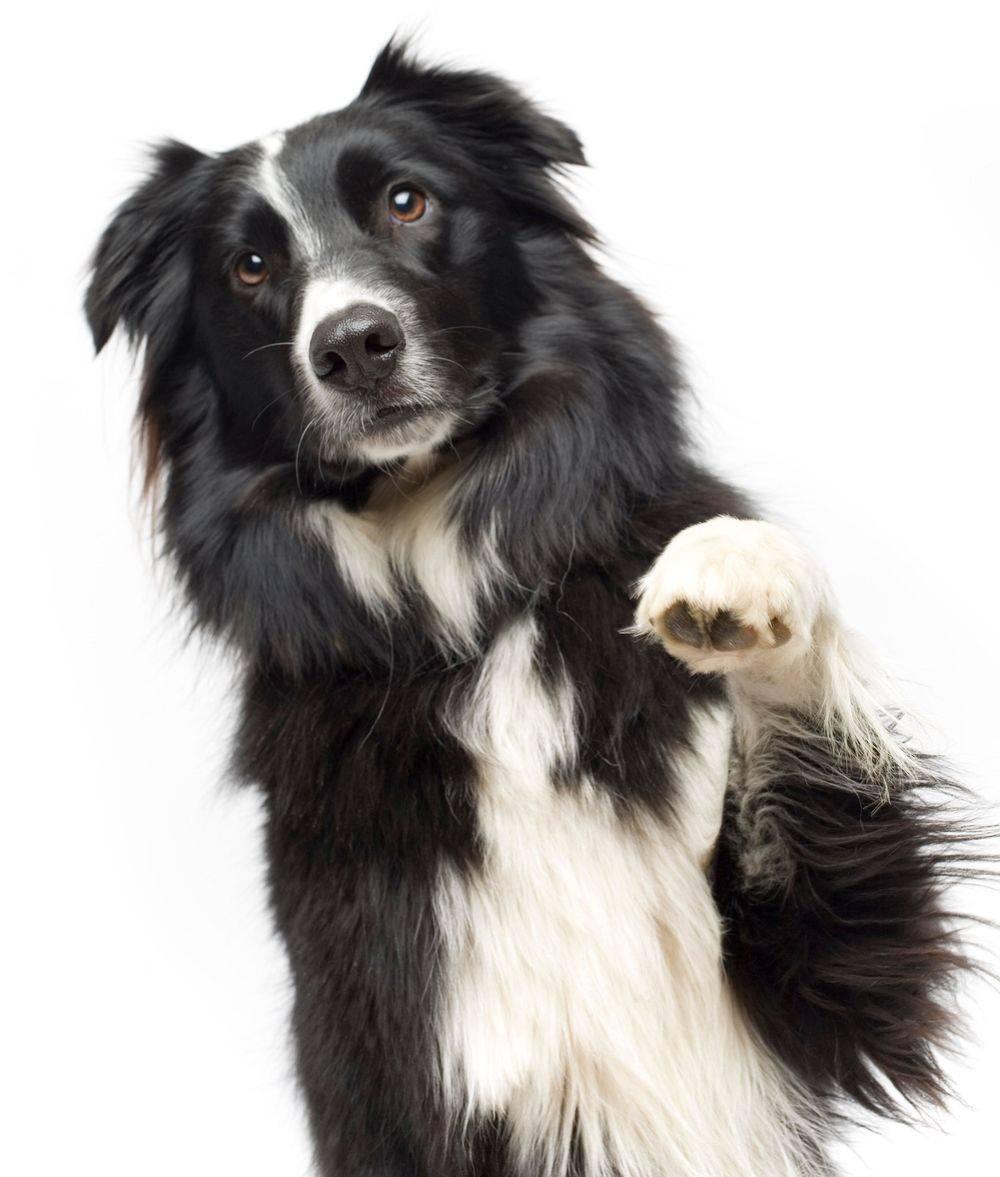 verzorging honden ellen's happy dogs hasselt