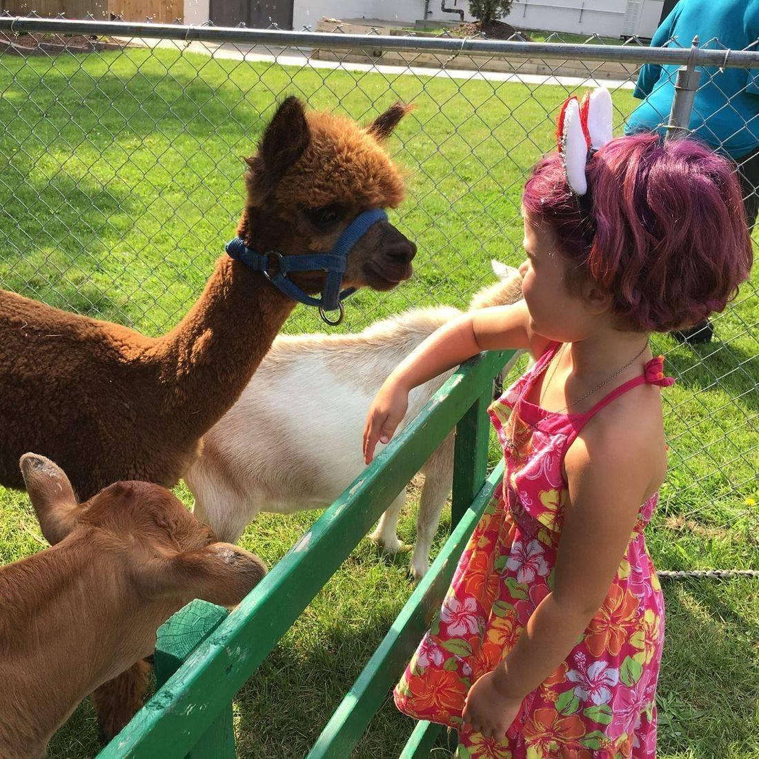 Cute farm animals in a pen