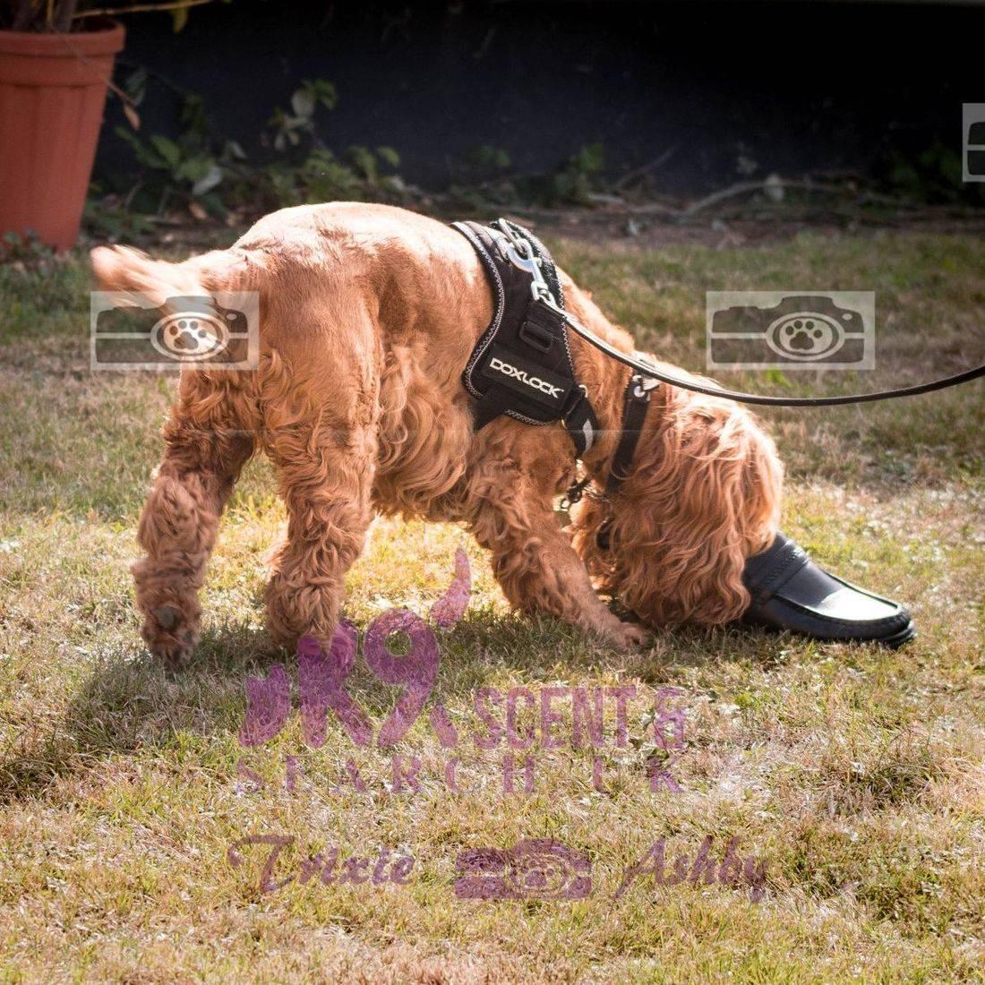Bobby Search Dog