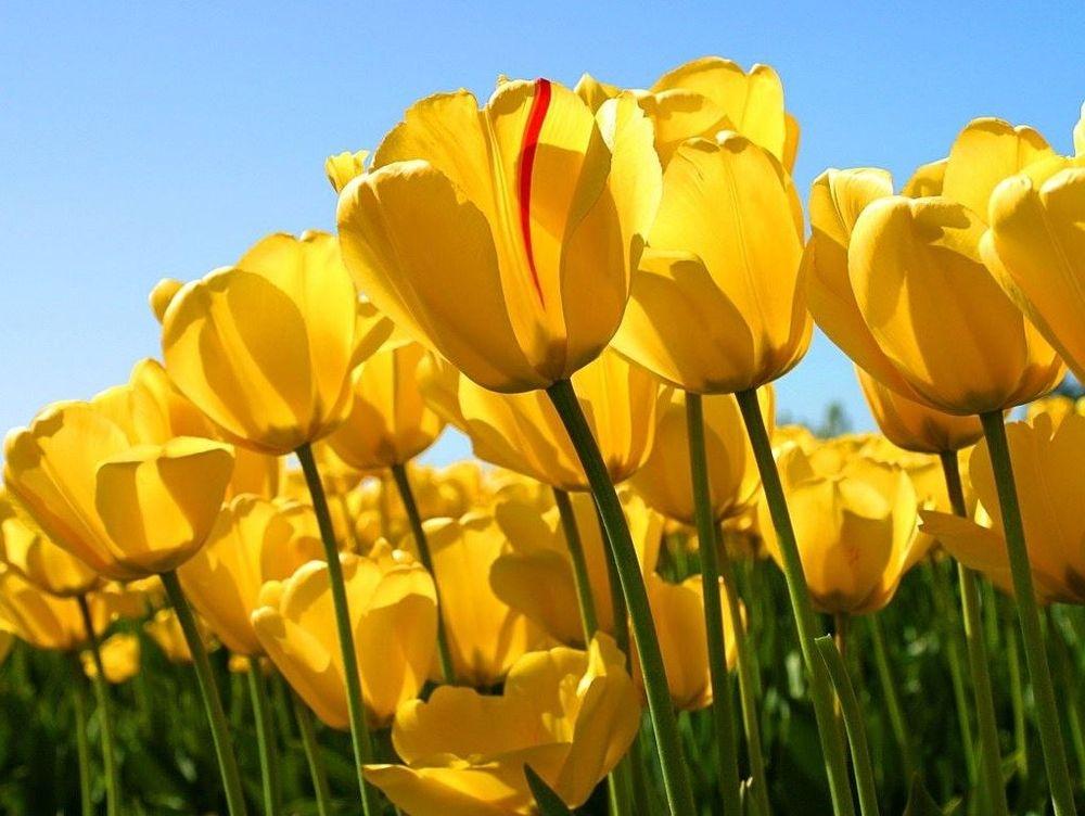 Tulips Client testimonial