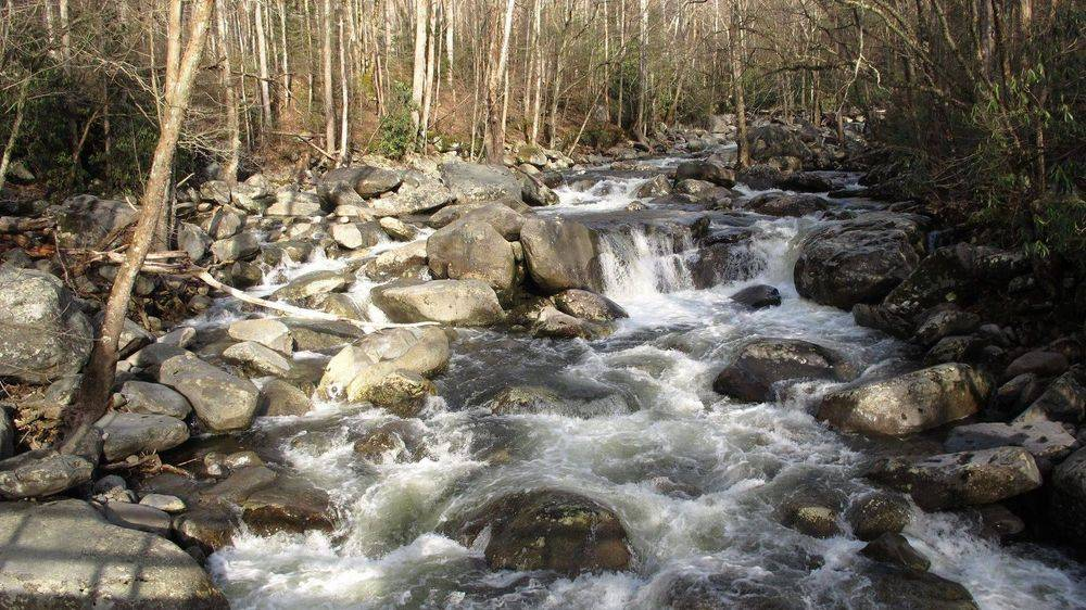 Babbling Brook in the Smoky Mountains