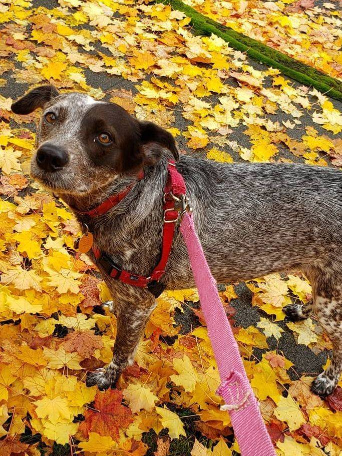Bella, Pug in the Grass