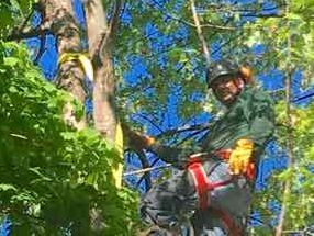 Tree Trimming Des Moines