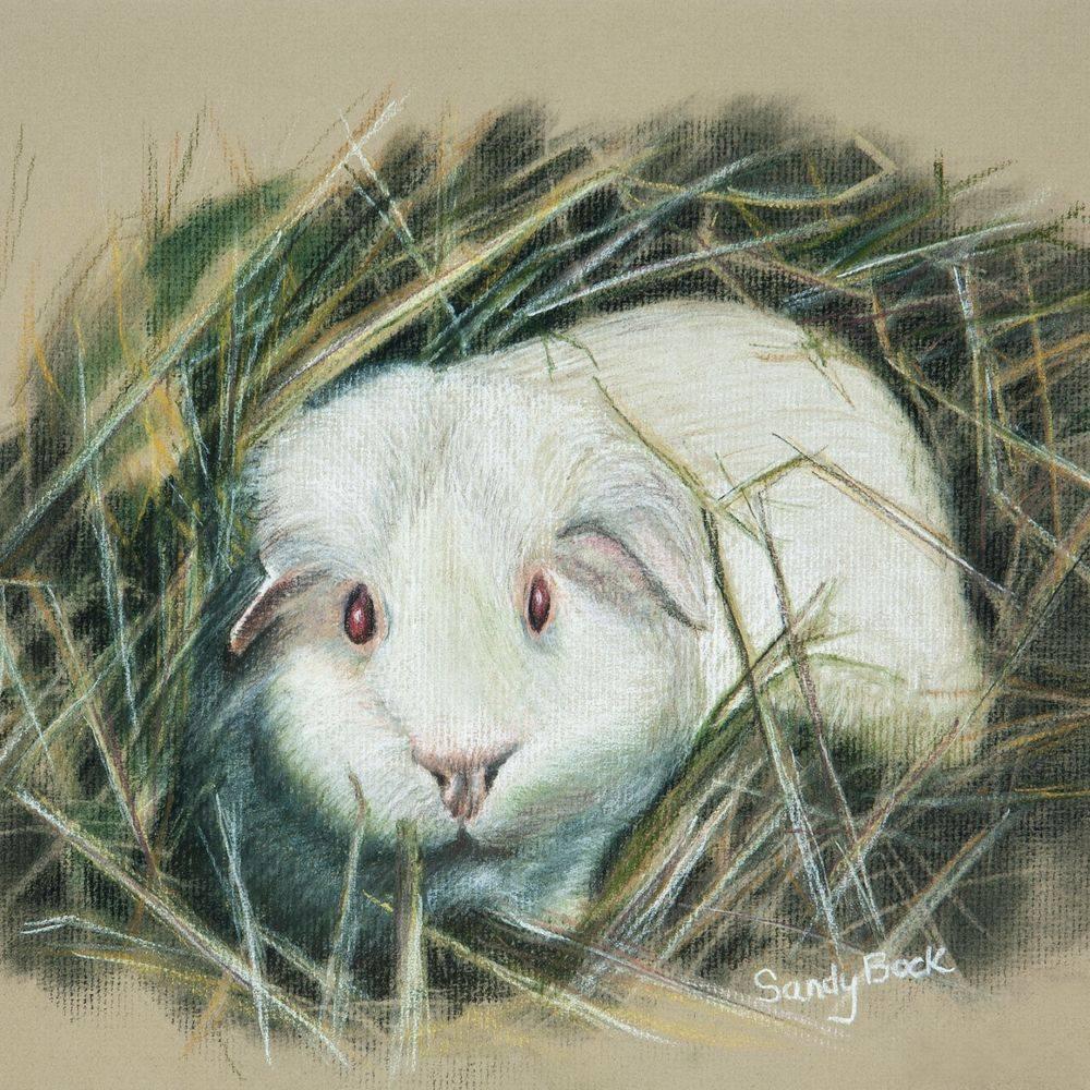 guinea pig, pets, pet portrait, pastel portrait, pastel