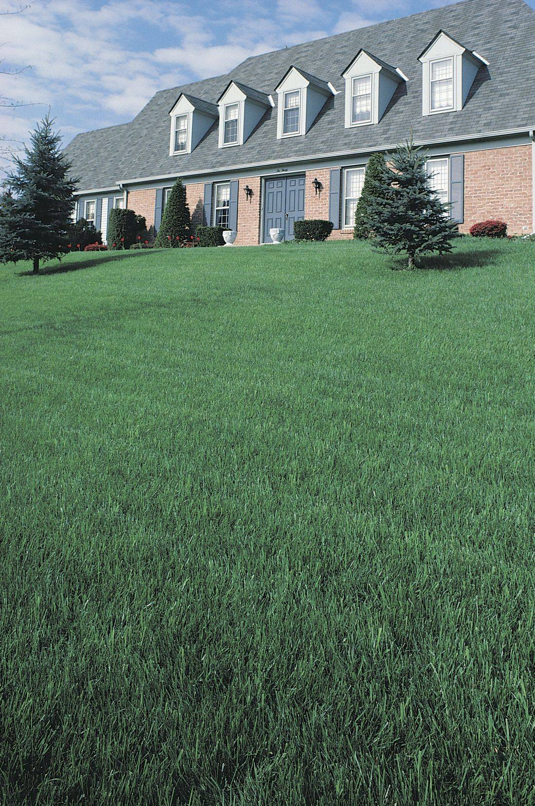 Pro Grounds Lawn Amp Snow Llc In Greenwood In