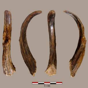 Ces outils vieux de 90 000 ans n'ont pas été fabriqués par des Homo sapiens