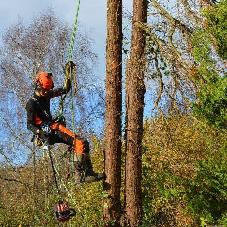 Tree Care North Devon