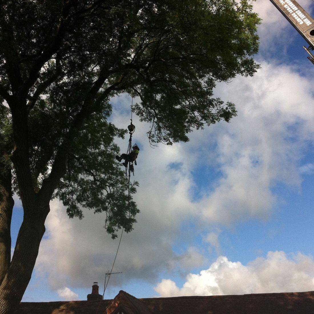 Removal of large Ash tree using crane to lift over house