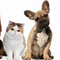 Image of cats and dogs, let me help you find pet friendly apartments