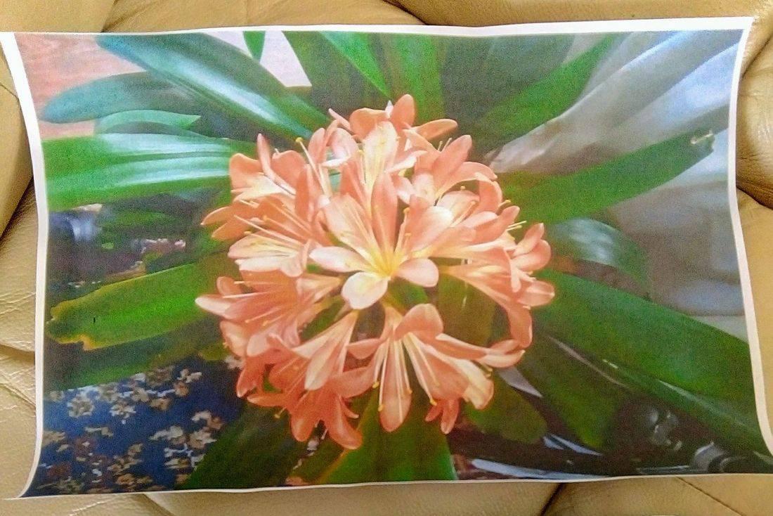 Photo of an orange flower