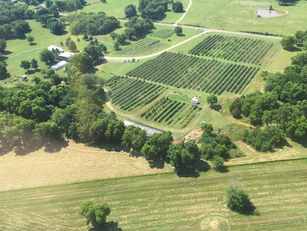 blueberry farm aerial